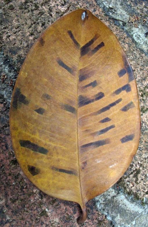 leaf-rawa-vert