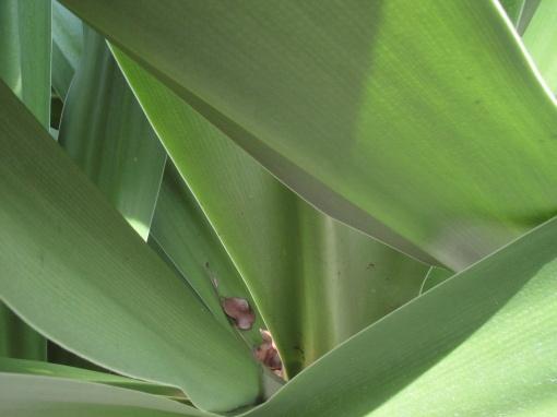 rawa-leaves