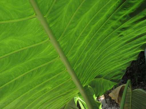 rawa-leaves2