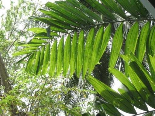 rawa-leaves3
