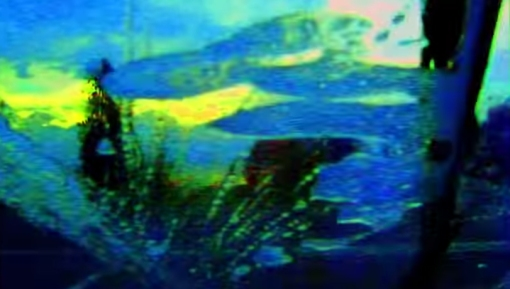 Adieu-au-langage-Jean-Luc-Godard-2